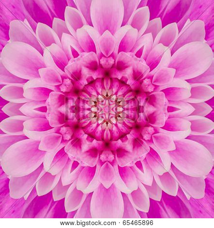 Pink Purple Concentric Chrysanthemum Flower Center. Mandala Kaleidoscopic design poster