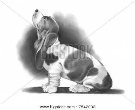 Pencil Drawing of Basset Hound Dog