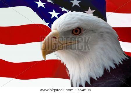 Weißkopfseeadler auf Flagge
