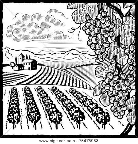 Vineyard landscape black and white. Vector