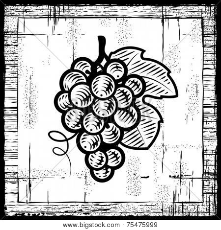 Retro grapes bunch black and white. Vector