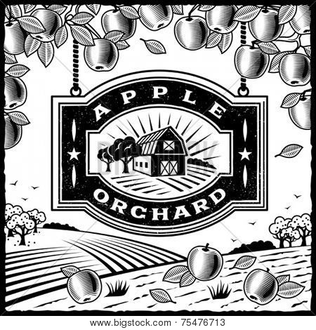 Apple Orchard black and white. Vector