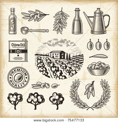 Vintage olive harvest set. Fully editable EPS10 vector.
