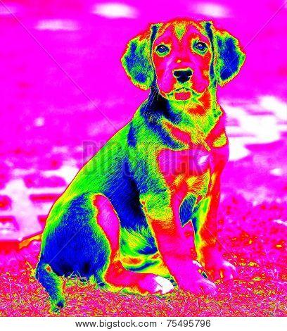 Infra Red Dog