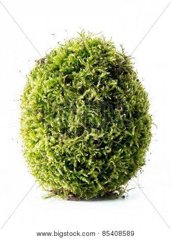 Giant moss-grown egg over white background