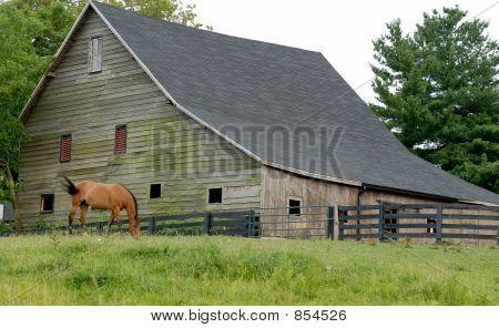 Horse Grazing by Barn
