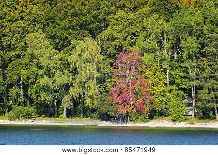 Trees Lake Tutzing