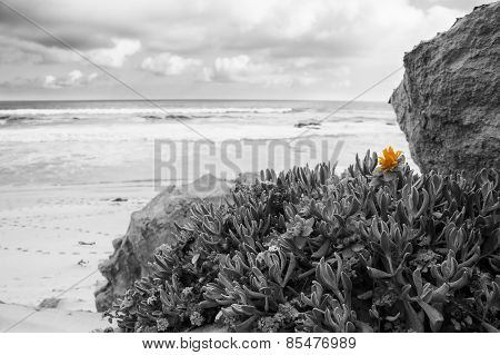 Late Evening Landscape Beach Over Rocky Shore And Beach Vegitation Artistic Conversion