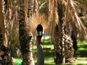 African crane and plenty of palms poster