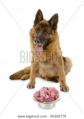 Cute dog with food isolated on white