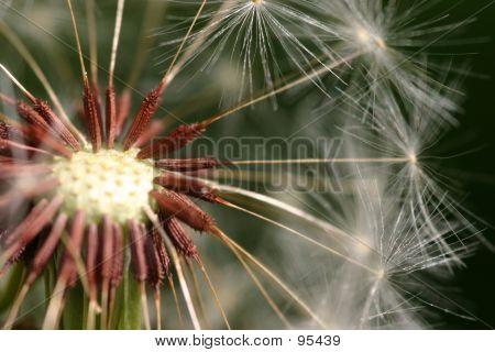Super Macro Seeds