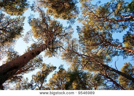 Torekov Forest