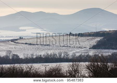 winter vineyards near Velka Trna, Tokaj wine region, Slovakia poster