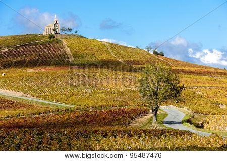 vineyards grand cru in Beaujolais with a church, Fleurie, Rhone-Alpes, France