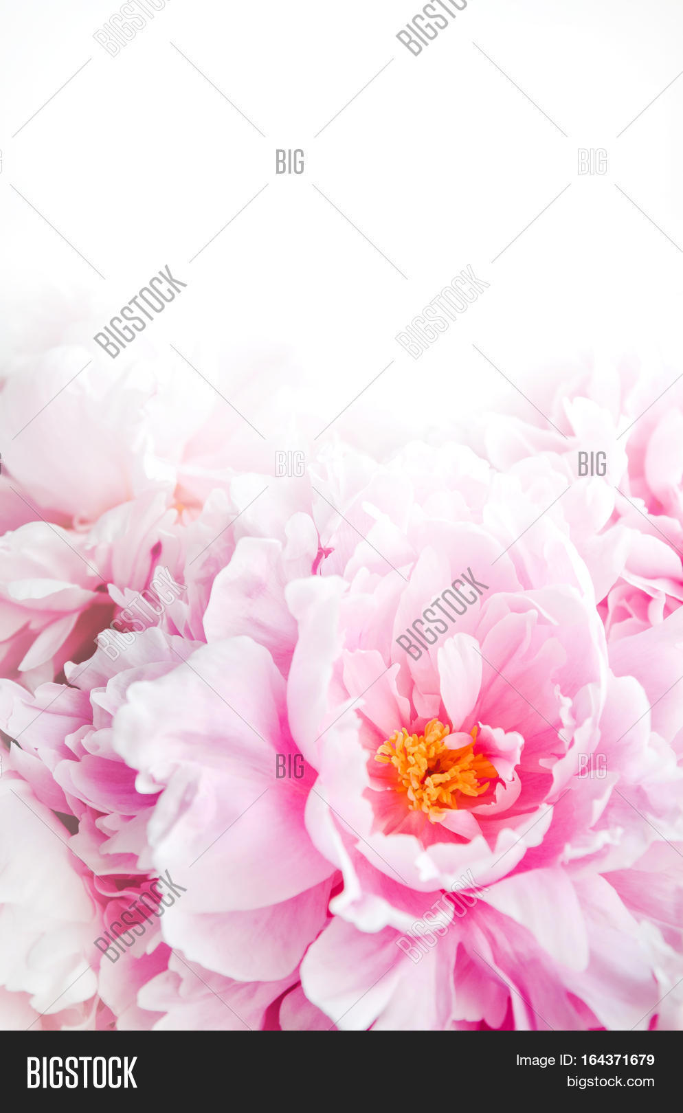 fresh bunch pink image & photo (free trial) | bigstock