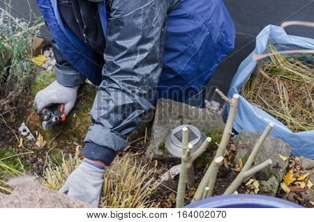 Woman with work gloves and garden tools while planting a flower bed in autumn. agriculture concept