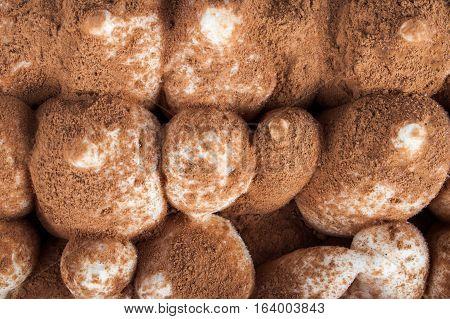 Ice tiramisu close up. Food background. Desserts