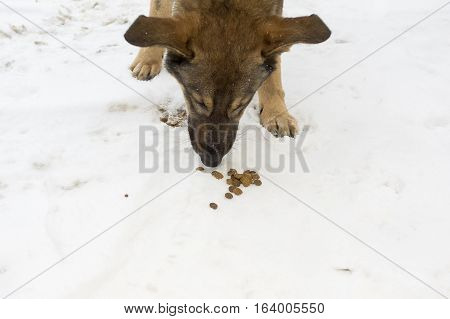 Stray dog sniffing dog food granules laid on the snow outdoor cropped shot. Concept of help to animals