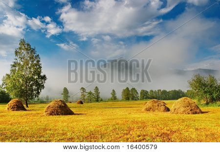 Landscape with hayfield