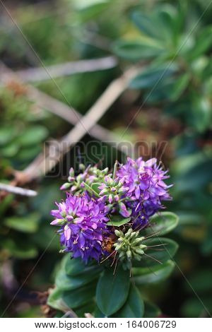 Detailed purple flowers amidst a see of green leaves