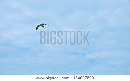Seagull flying high with wide spread wings towards light against a blue sky inspirational concept of freedom and aspiration