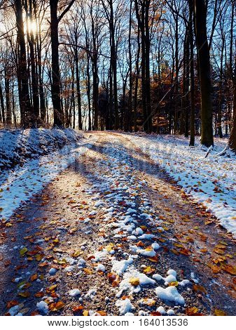 Snowy Path Under Beech Trees In Early Winter Forest.