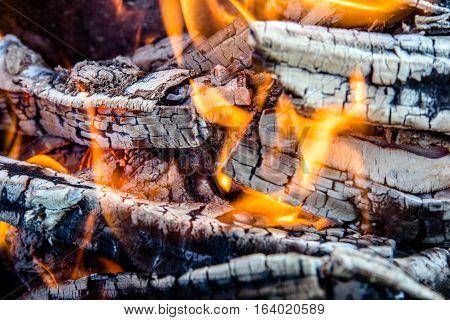 birch firewood burning in an iron brazier