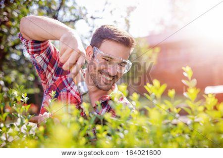 Man working in his garden cutting hedge.