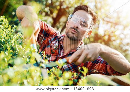 Man working in his garden cutting hedge.