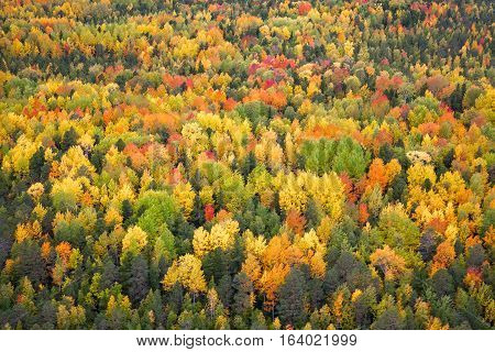 Aerial view of forest in autumn. Leafs of trees are painted in diferent bright colors.
