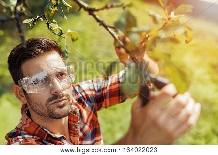 Gardener cuts dry branches of trees selective focus