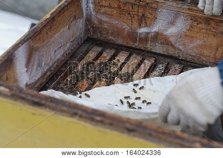 Hands of a beekeeper inspecting a beehive in a winter outdoor selective focus shot