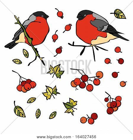 Bullfinches. Berries and leaves. Isolated vector objects on white background.
