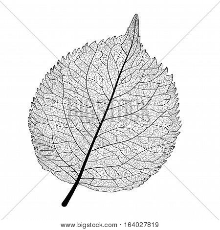 Leaf isolated . Vector illustration. EPS 10