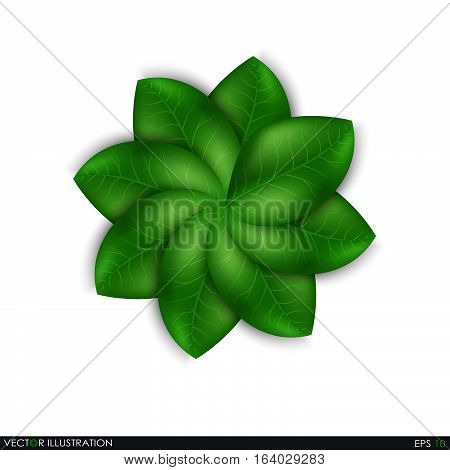 Leaves Design Elements
