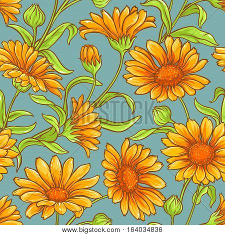 calendula flowers vector color seamless pattern on color background