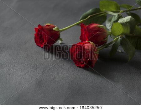 Red roses arrangement for a funeral on a grey background