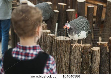 Boy Looking At A Turkey.