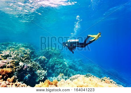 Female scuba diver swimming under water. Red sea. Egypt.