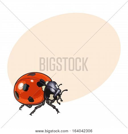 Red ladybug, ladybird with black spots, sketch illustration isolated on background with place for text. color realistic hand drawing of ladybug or ladybird on white background