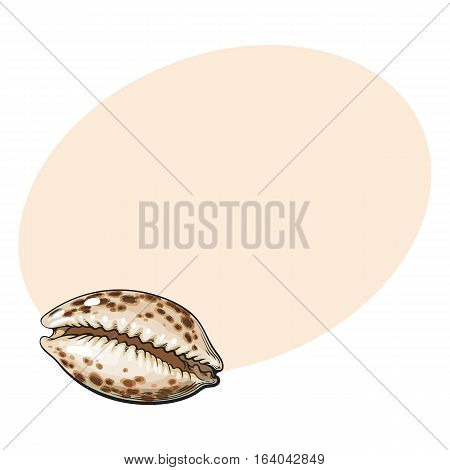 Colorful cowrie or cowry sea shell, sketch style vector illustration isolated on background with place for text. Realistic hand drawing of shiny saltwater sea snail, cowrie shell with tiger pattern