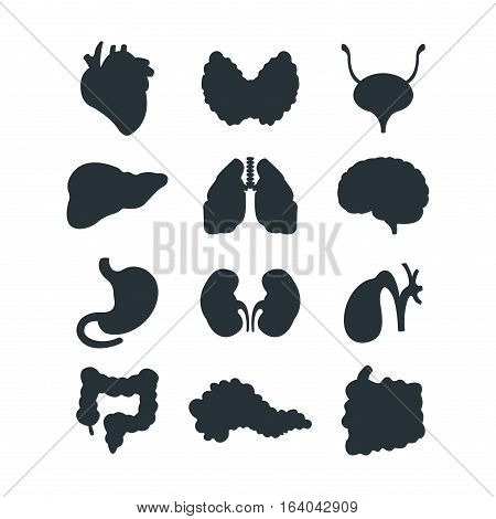 Human internal organs silhouette medicine anatomy element vector illustration. Respiratory people body part structure. Science system biological health symbol.