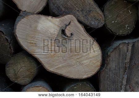 texture of fresh cut logs of irregular shape with a pattern inside