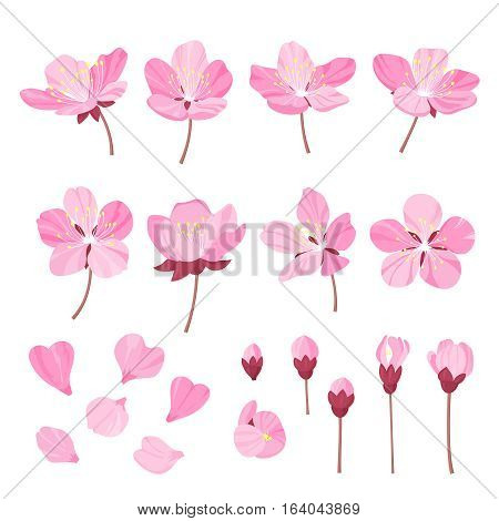 Set of beautiful cherry tree flowers isolated on wite background. Collection of pink sakura or apple blossom, japanese cherry tree. Floral spring design elements. Vector illustration