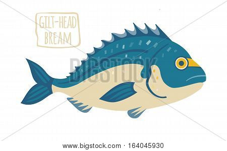 Gilt-Head Bream, blue and beige, vector illustration