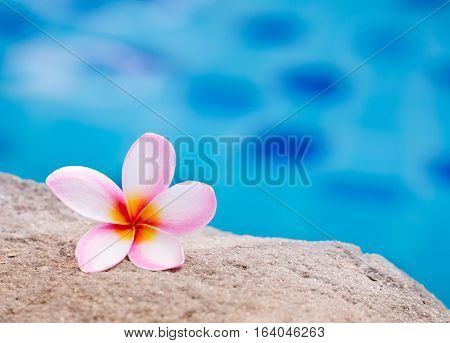 Pink plumeria flower on the sand beside swimming pool