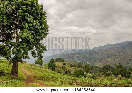 Small footpath next to large tree in highlands of Cameroon with dramatic cloudy sky and villages in distance, Africa.