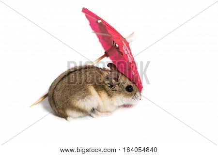 Small Cute Hamster With A Red Cocktail Umbrella