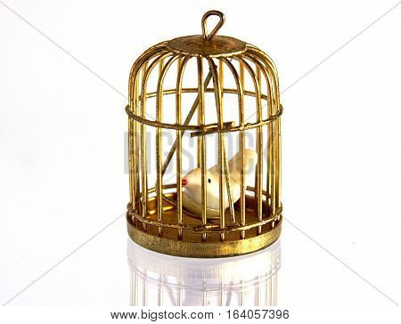 Miniature of vintage golden birdcage with fake little bird and with mirror reflection