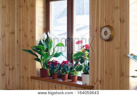 Green house plants on big wooden window